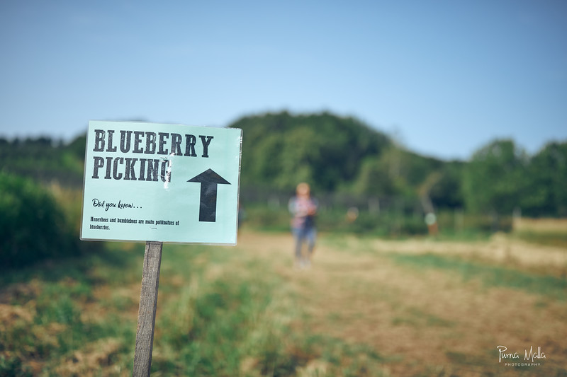 Cider Hill Farm 48.jpg