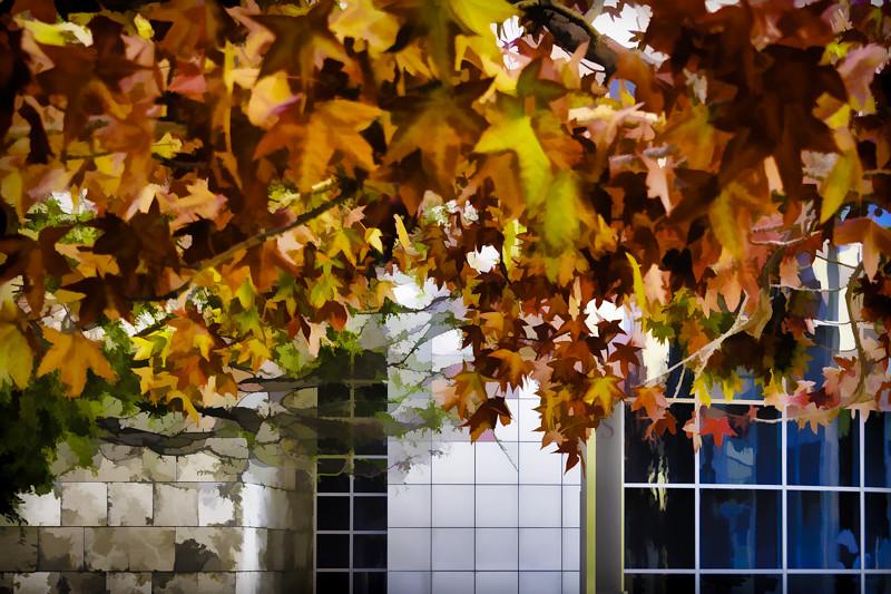 October 19 - Splendor of autumn, The Getty, Los Angeles.jpg