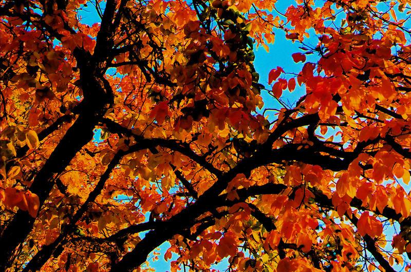fall fresco 12-8-2008.jpg