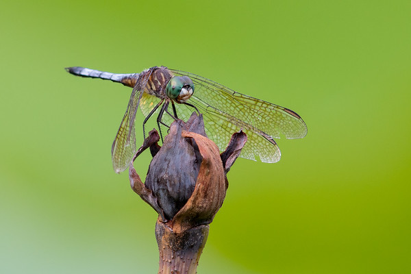 Butterflies, Dragonflies, and Small Wonders
