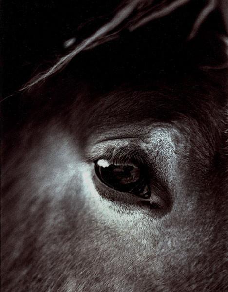 Horse-eye-4--best-brown 1.jpg