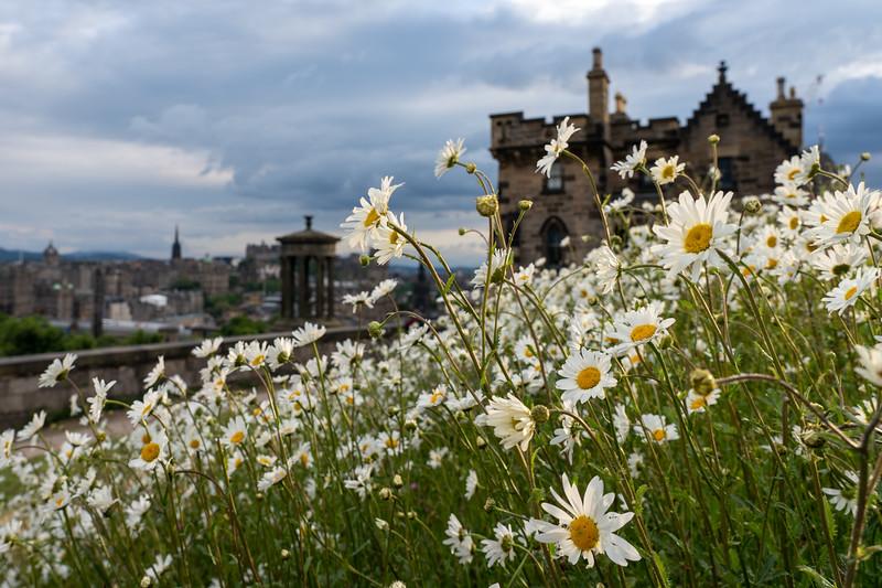 Flowers at Calton Hill in Edinburgh