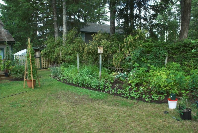 Backyard, garden