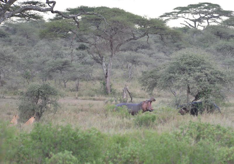 East Africa Safari 291.jpg