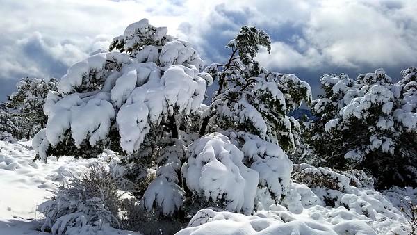 Spring Snow 2020