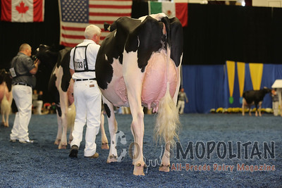 WDE Holstein Senior Cows 2015
