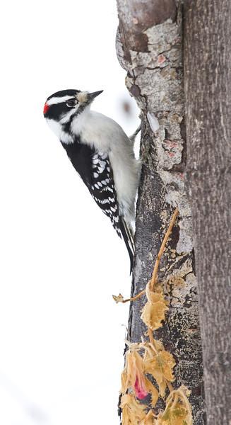 Winter Birds 2012 -13