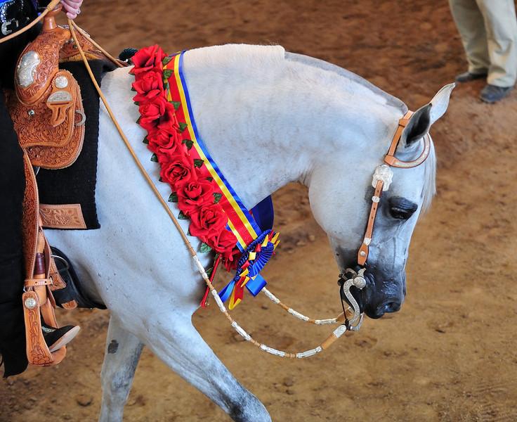 Arabian  AZ _216.jpg
