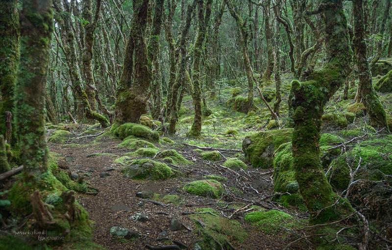 Tasmania_2015_090-Edit.jpg