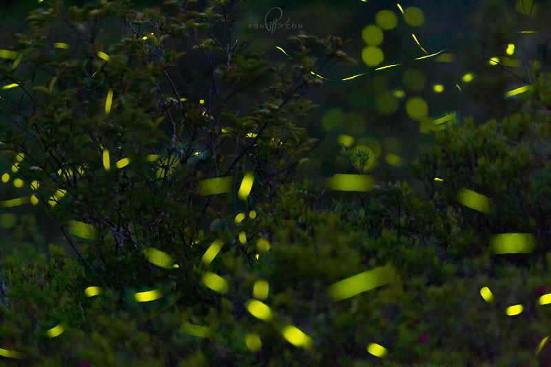 sm fireflies 5_M4D3455.jpg