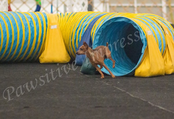 AKC Agility Trial at CCSC in Columbia, MO Sun Excellent JWW 4-28-13