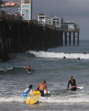 Surf Monkey 2009