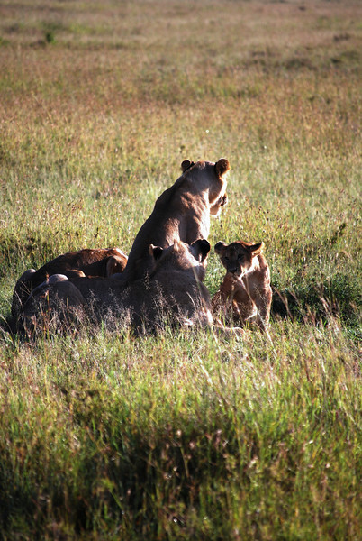 Serengeti (105).JPG