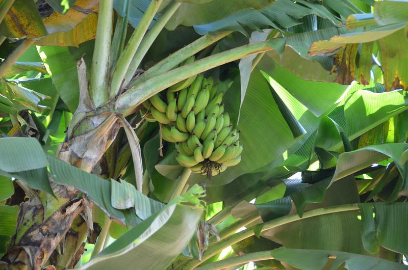 Oahu Hawaii 2011 - 91.jpg