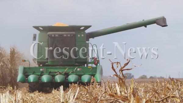 10-24-13 NEWS TL corn harvesting