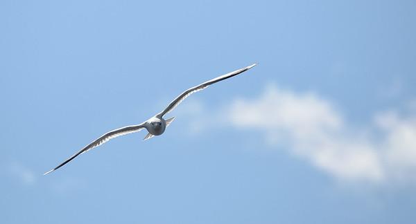 Bigger birds