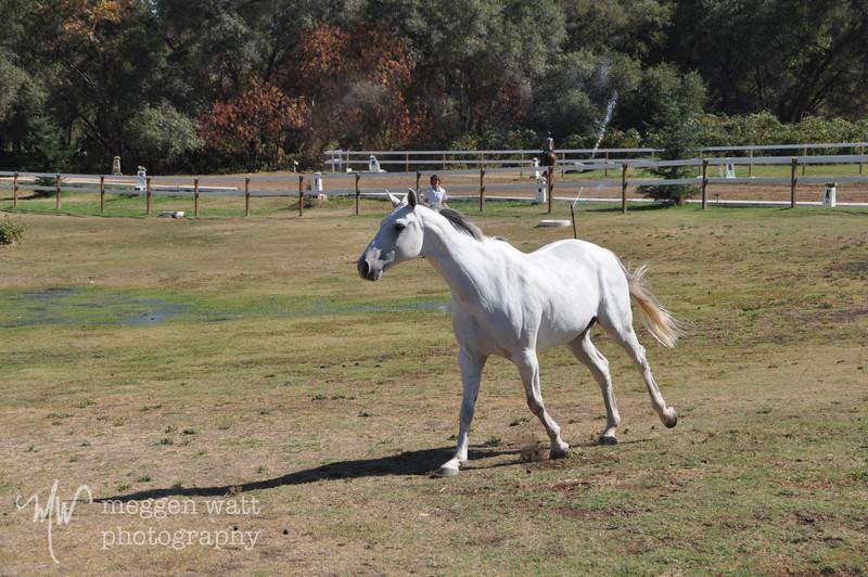 EB&Horses-086.jpg