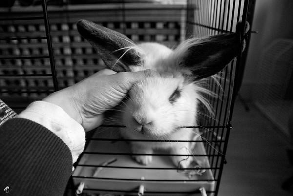 Guest Rabbit