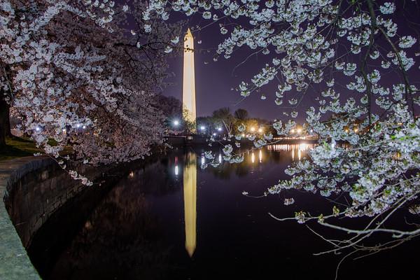 Cherry Blossom Festival 2021