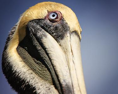 Key Largo Wildlife