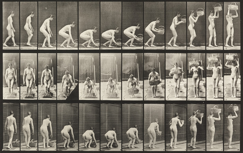 Nude woman stooping and  lifting a 12-lb. basket to head (Animal Locomotion, 1887, plate 221)