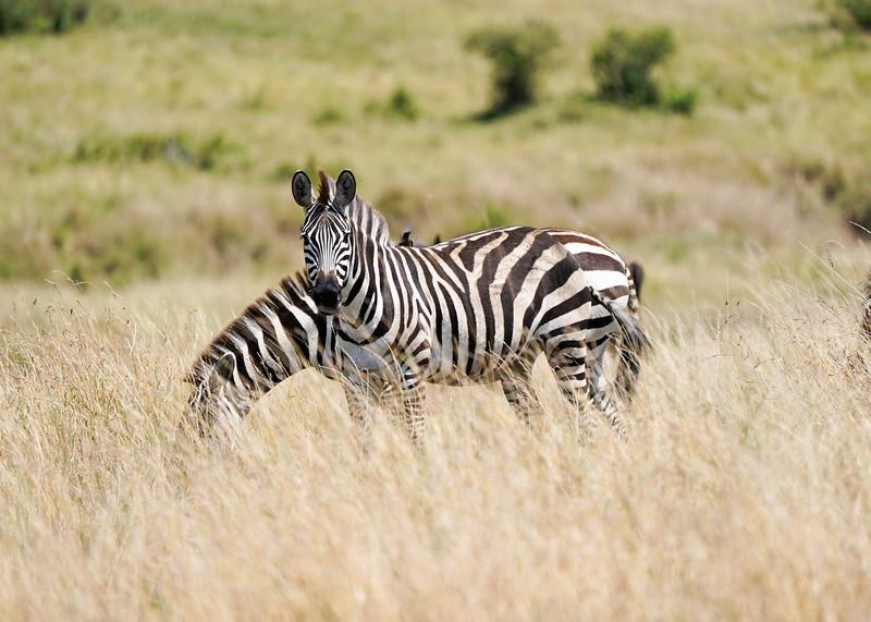 safari-2018-54.jpg