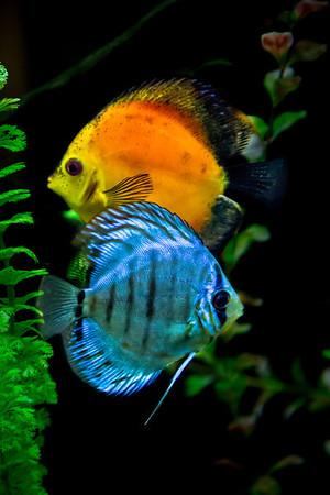 IFCC Mystic Aquarium