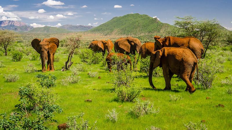 Elephants-0214.jpg