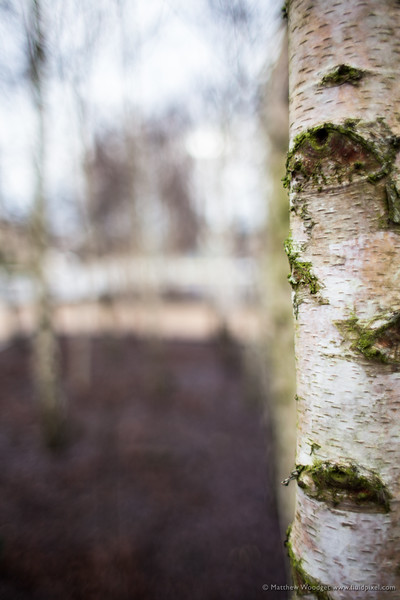 Woodget-140118-011--bokeh, out of focus, Tree, winter.jpg