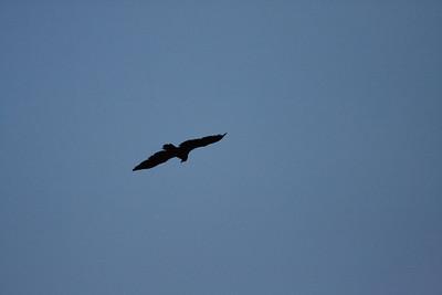 28 Day 4 Fri: Raven at sunrise