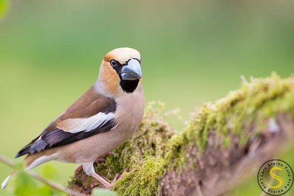 Fuglar - Ville dyr - Birds - wild animals