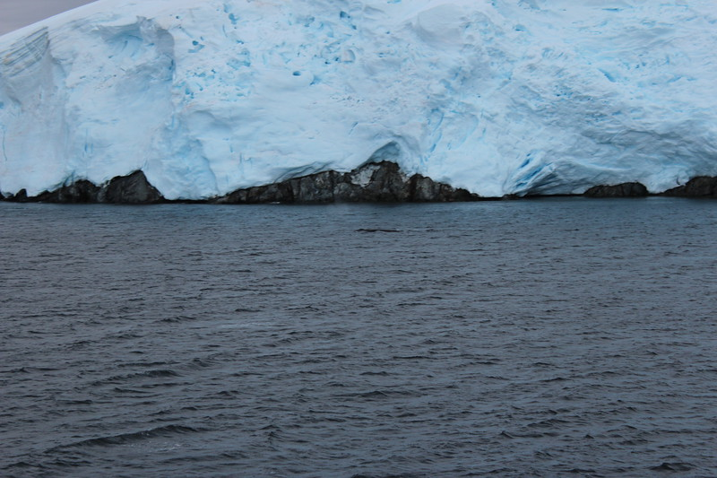Antarctica 145.JPG