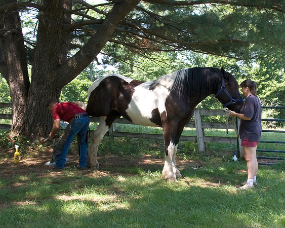 Pedicure for the horses, July 1, 2011