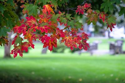 autumn :: 2018