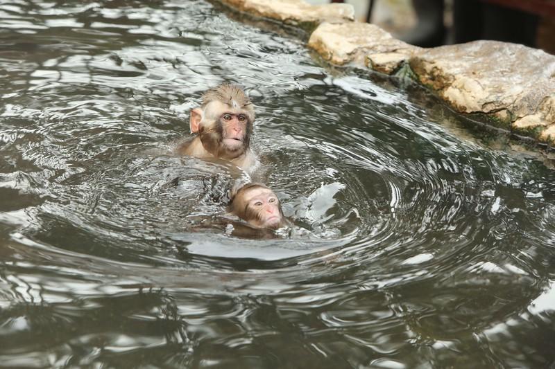 Monkey Dunking...