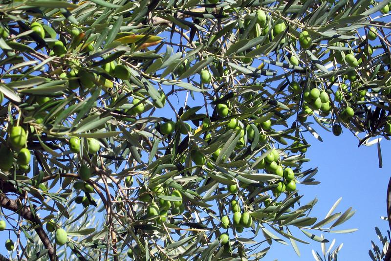 So many olives!