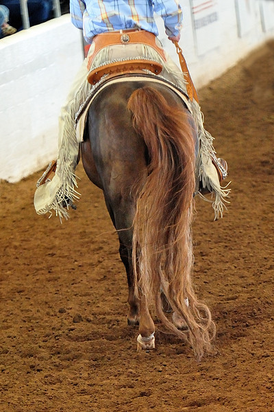 Arabian  AZ _31.jpg