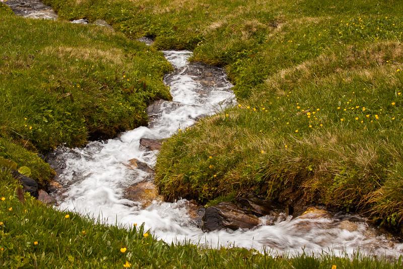 Rheinwald-Flora-Fauna-Sujets-D-Aebli-009.jpg
