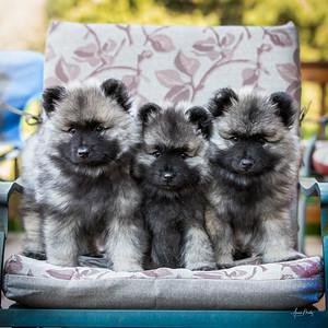 Kathy Gray puppies