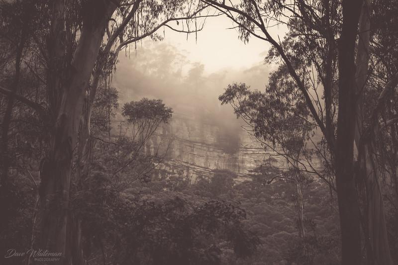 Megalong Mist