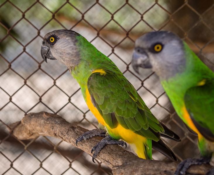 Two parrots in Melios Zoo