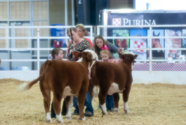 Tulsa Mini-Herefords