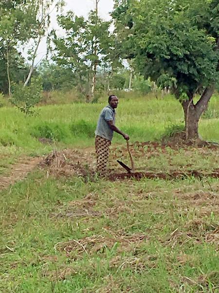 TChow farmer 1.jpg