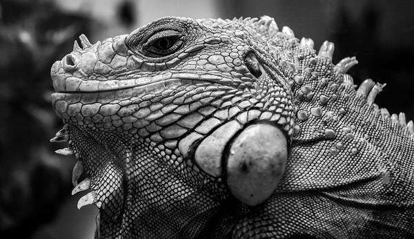 Reptile Zoo 12/18
