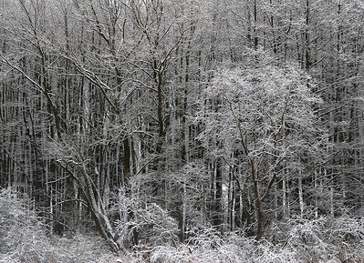 Skog / Woods