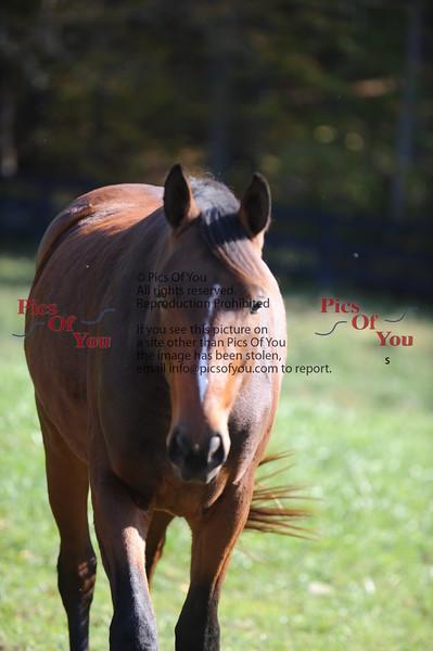3rd horse