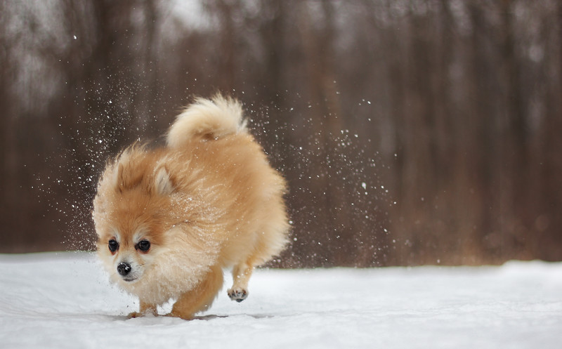 dog-winter6.jpg