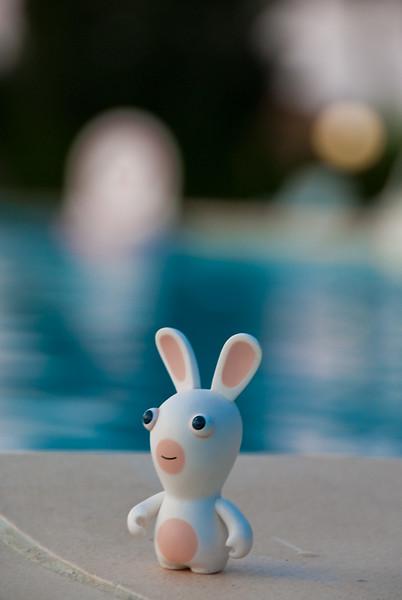 Rabbid near pool