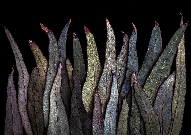Leaves (16 of 26)-Edit-Edit-Edit-2-Edit.jpg