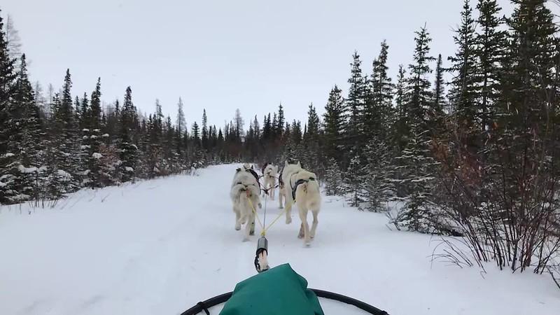 Dogsledding!